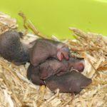 Prikkelende geboorte
